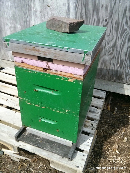 I added the second deep to this hive today, which has more bees than my hives with two deeps. (May 07, 2016.)