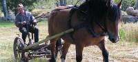 skörda med häst