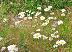 Dagsmark, flowers