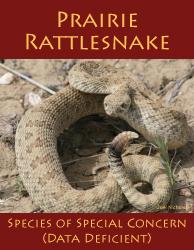 Prairie Rattlesnake