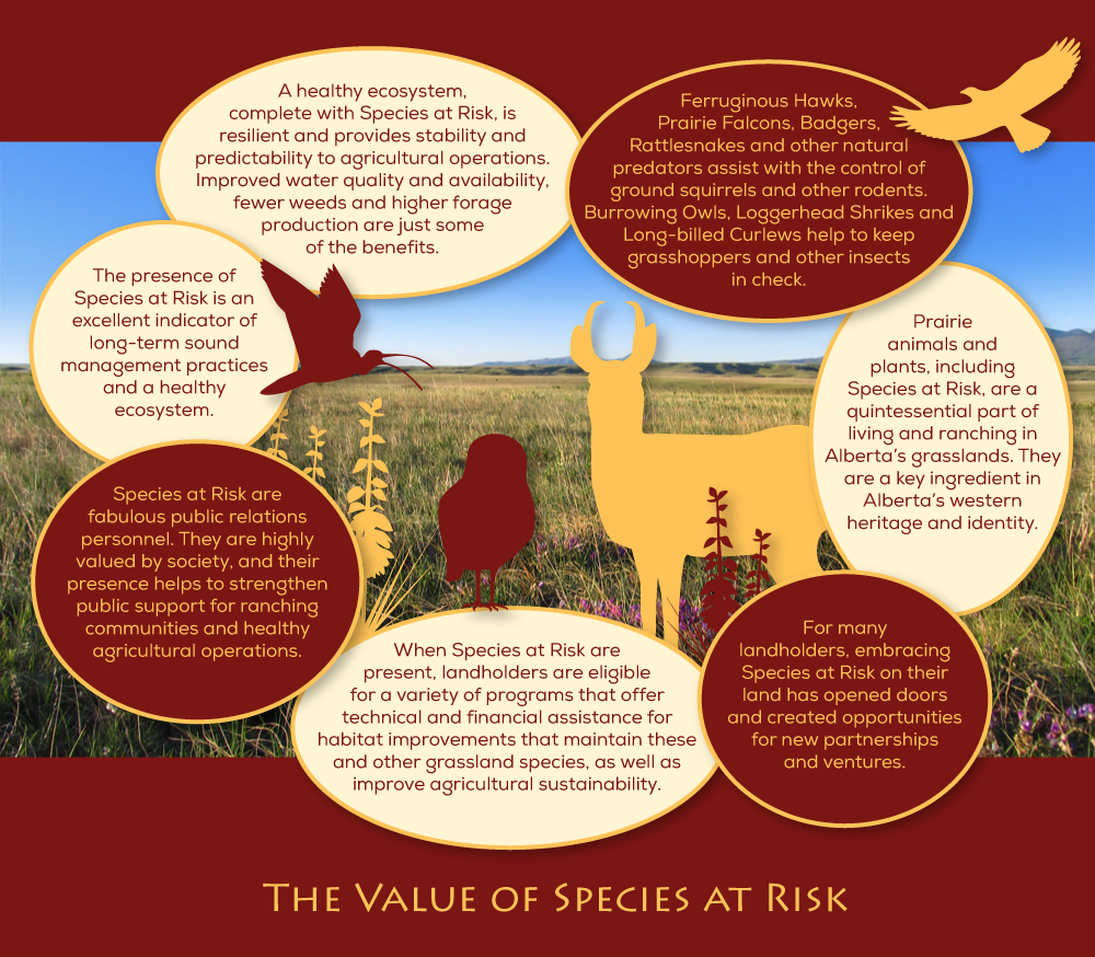 Value-of-Species-at-Risk-DIAGRAM