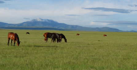 prairiewithhorses