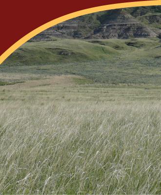 grasslands-under-cover