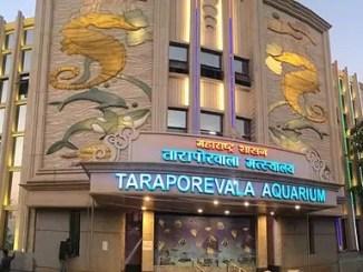 TaraporewalaAquarium_Renovated