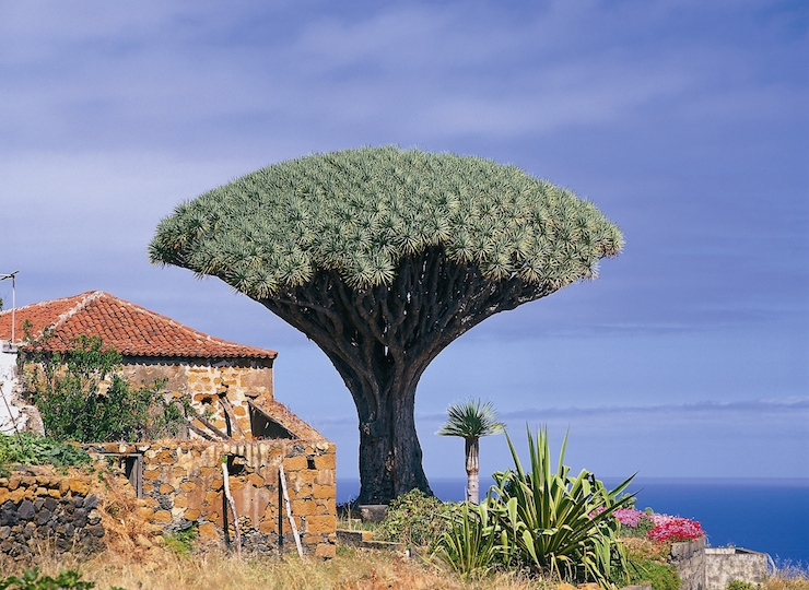 Top things to do in Tenerife with kids