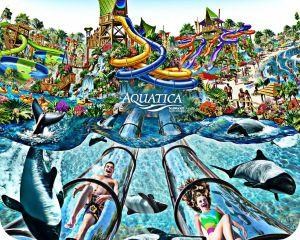 Aquatica, Aquatica Florida, Sea World, Sea World Orlando, Orlando, Orlando Attractions, Florida Attractions