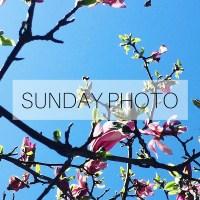 Sunday Photo: 1 May 2016