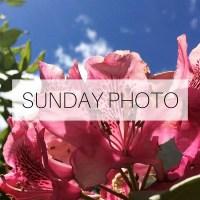 Sunday Photo: 19 June 2016