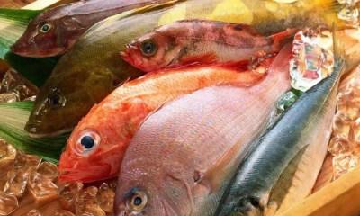 Peixes frescos (Foto: 51 WALL)