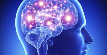 Cérebro humano em 3D (Foto: Stockvalt)