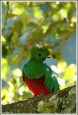 El Quetzal - foto por flickr - brettocop