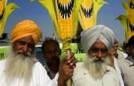 Las creaciones OGM de Monsanto causan 291.000 suicidios en la India