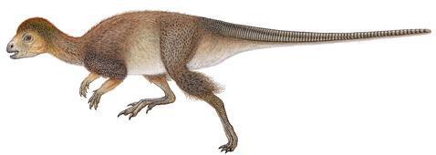 1lBUqMq Quizás todos los dinosaurios tuvieron plumas