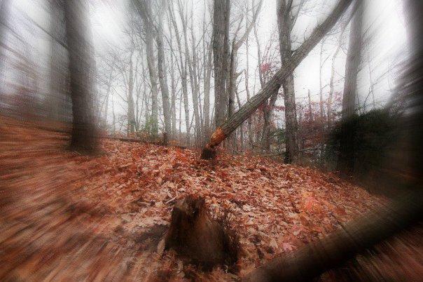 Bosques-Black-Hills La verdadera leyenda de la bruja de Blair: los hechos que dieron pie a la famosa maldició