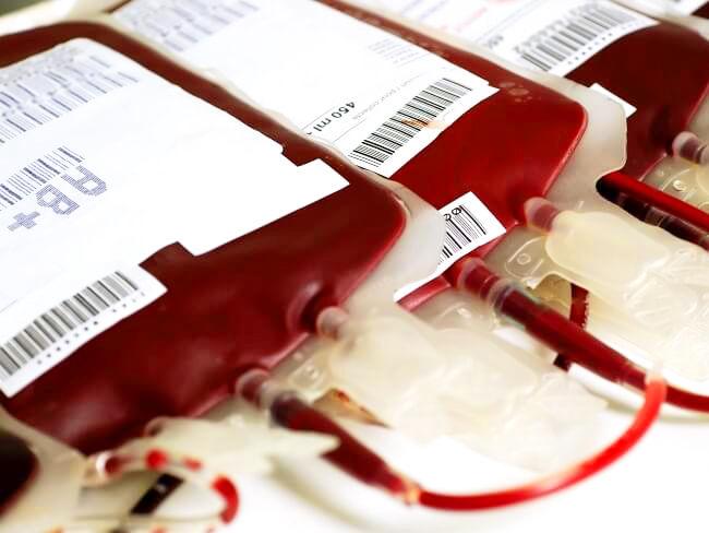 Logran rejuvenecer a ratones inyectándoles sangre de adolescentes humanos