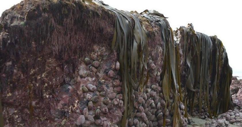 sea-bed-lifted_1024 El terremoto de Nueva Zelanda fue tan intenso, que levantó el lecho marino 2 metros sobre el suelo