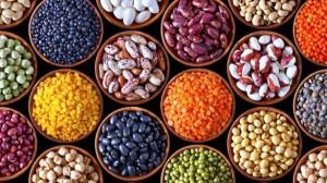 23 legumes