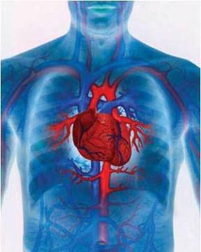 Mejores Suplementos Alimenticios Vascularizacion