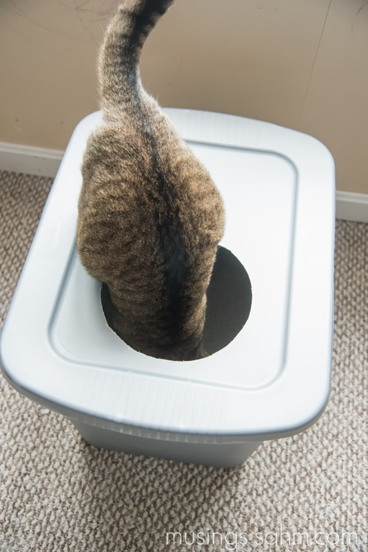 Diy Mess Free Cat Litter Box Simple Anyone Can Do It
