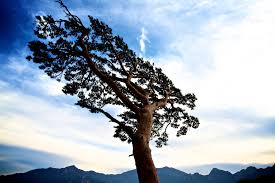resilience-tree