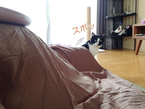 猫こたつの中で足に乗る