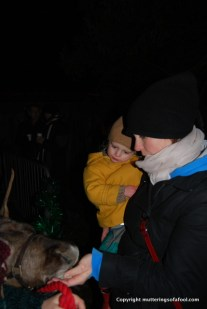 Feeding the reindeer