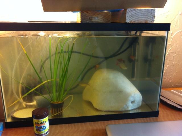 Initial 10 Gallon Fish Tank