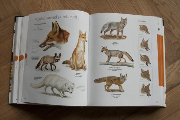 raamatud loomadest_046_v