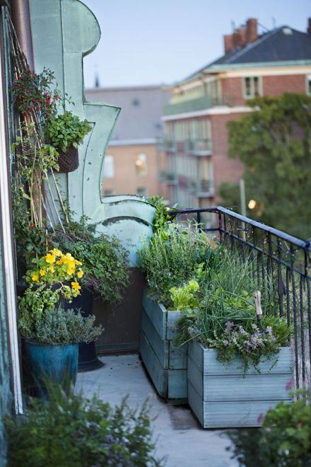 mrwonderful_jardin_balcon_05