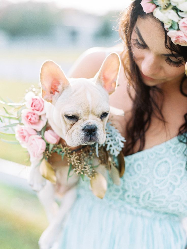 ¿Te llevarías a tu perro a tu boda? Ellos no lo dudaron ni un segundo