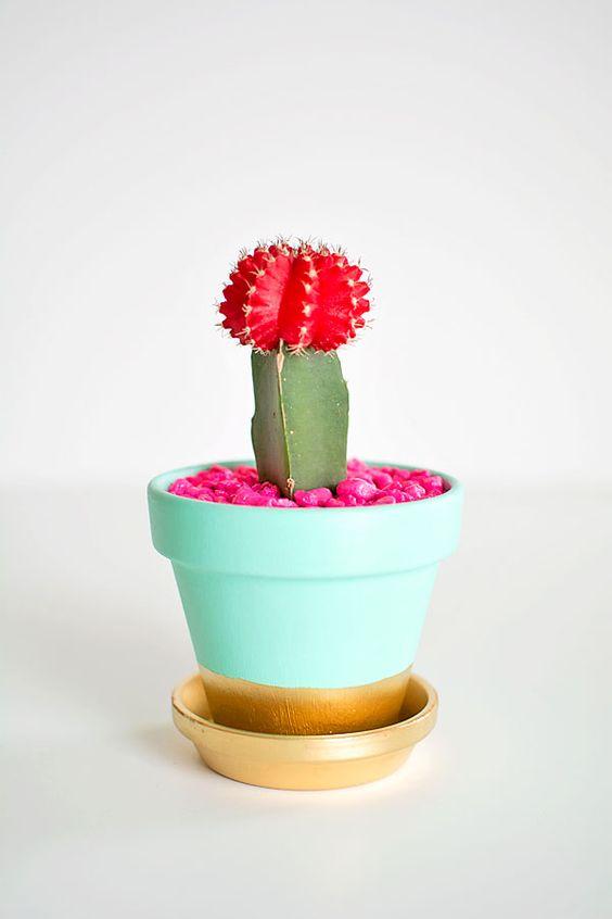 Esto no es el oeste, pero nos morimos por estos cactus