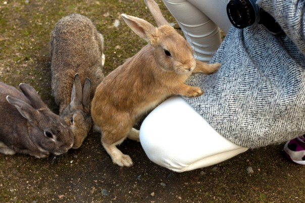 That could be your leg with rabbits climbing up it!