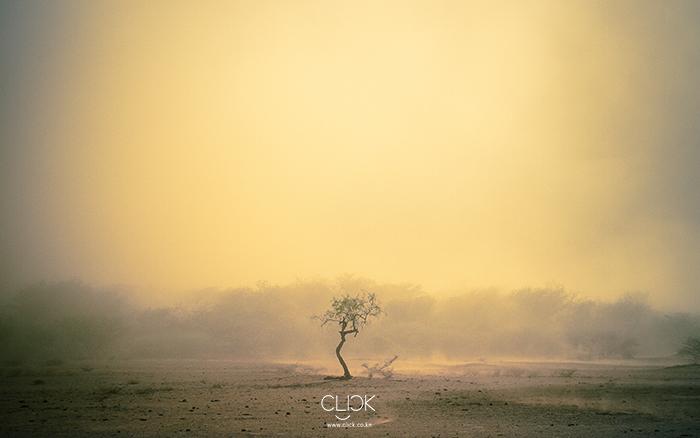African Screens 06  –   Lake Bogoria Tree