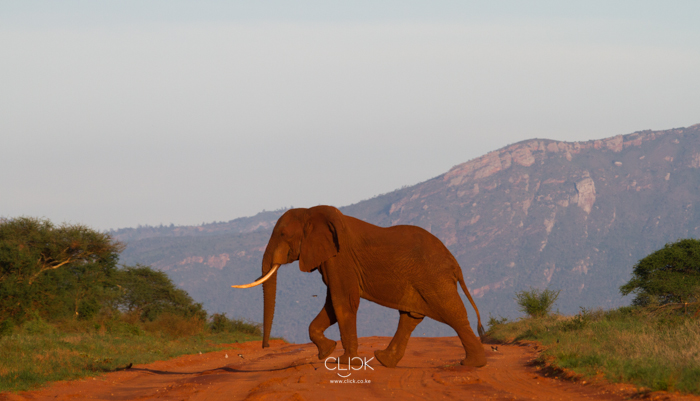 World_Elephant_Day-6