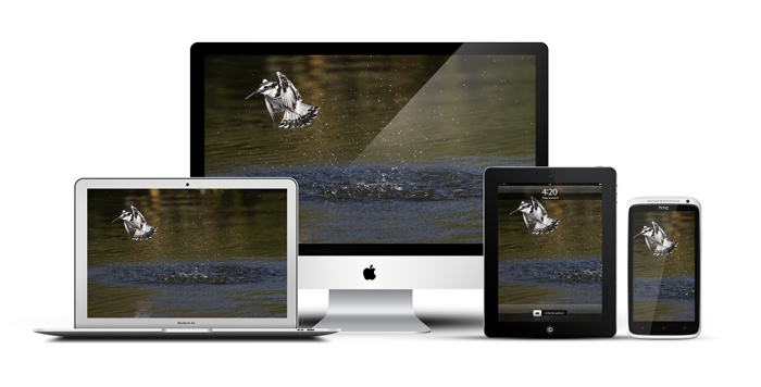 AfricanScreens_Devices_Lake_Naivasha_Kingfisher