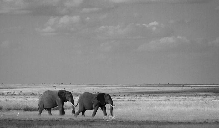 Amboseli_Onetouch_Live-12