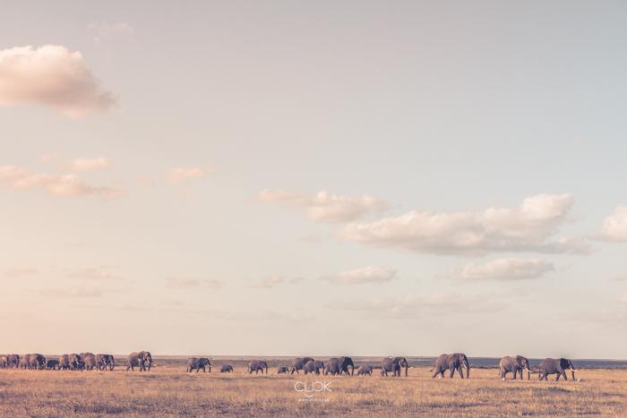 Amboseli_Onetouch_Live-15