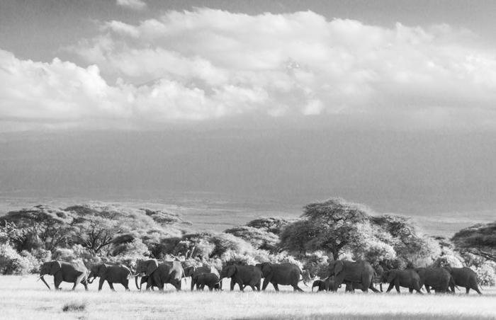 Amboseli_Onetouch_Live-22