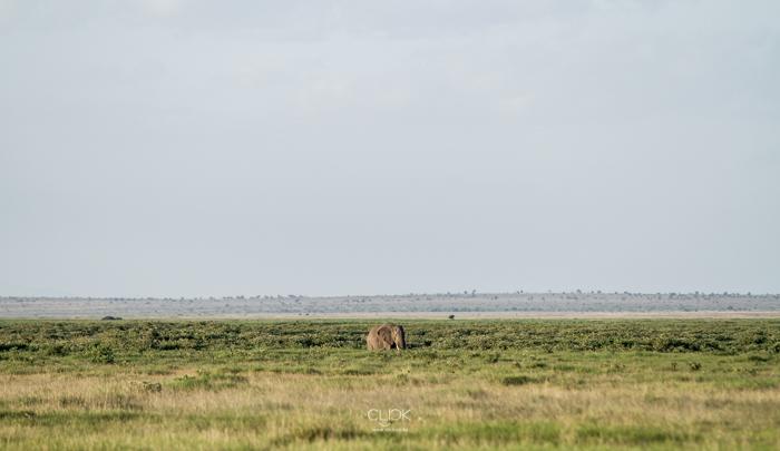 Amboseli_Onetouch_Live-23