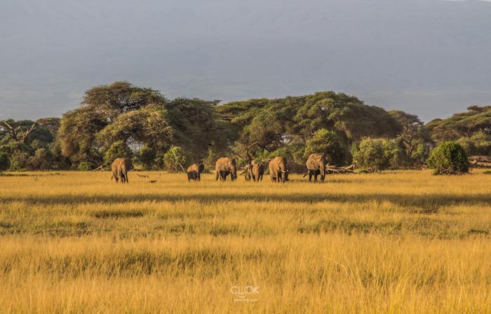 Amboseli_Onetouch_Live-32