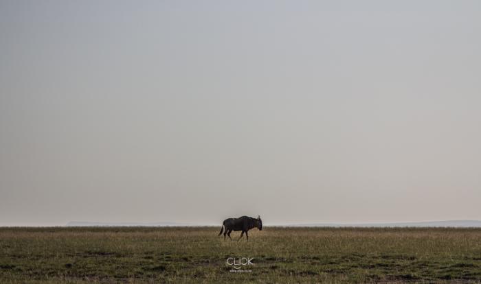 Amboseli_Onetouch_Live-34