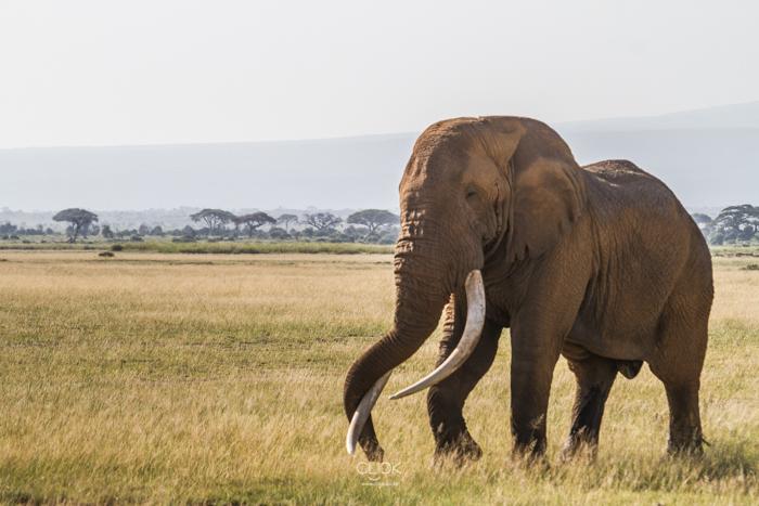 Amboseli_Onetouch_Live-36