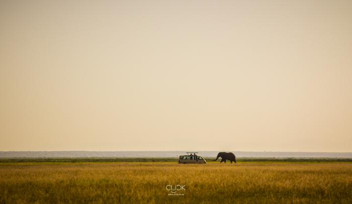 Amboseli_Onetouch_Live-38