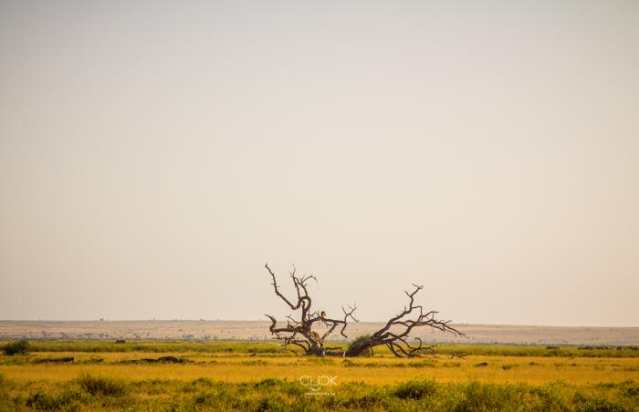 Amboseli_Onetouch_Live-39