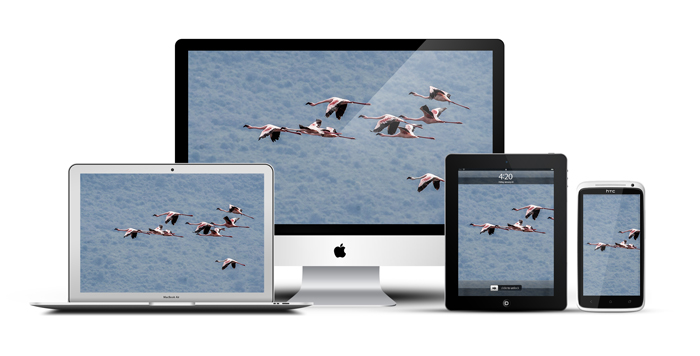 African-Screens-Wallpapers-Flamingoes-Devices