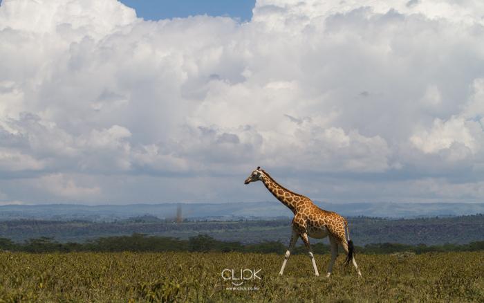 Lake_Nakuru-11