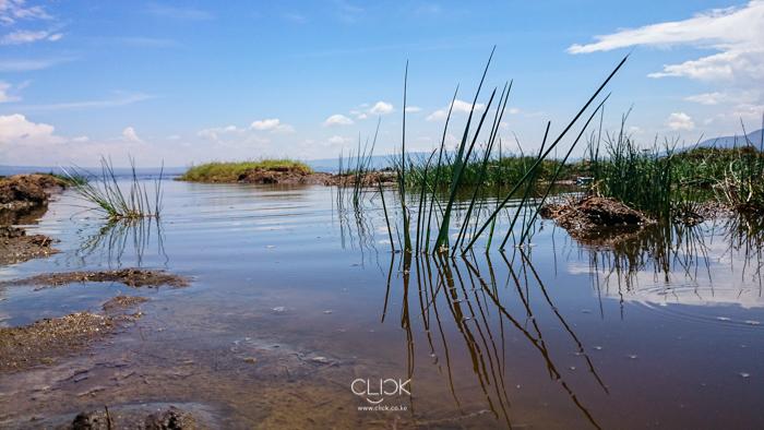 Lake_Nakuru-13