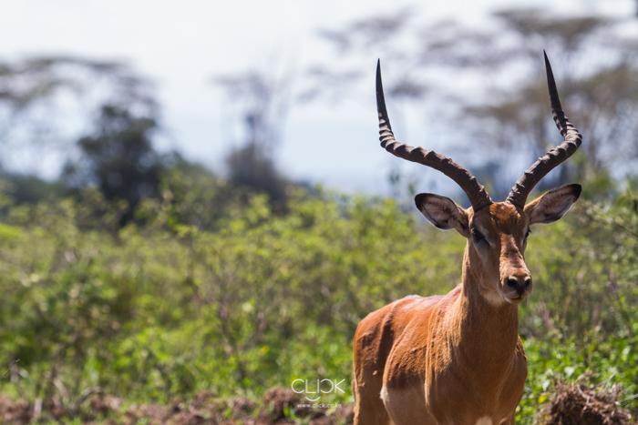 Lake_Nakuru-8