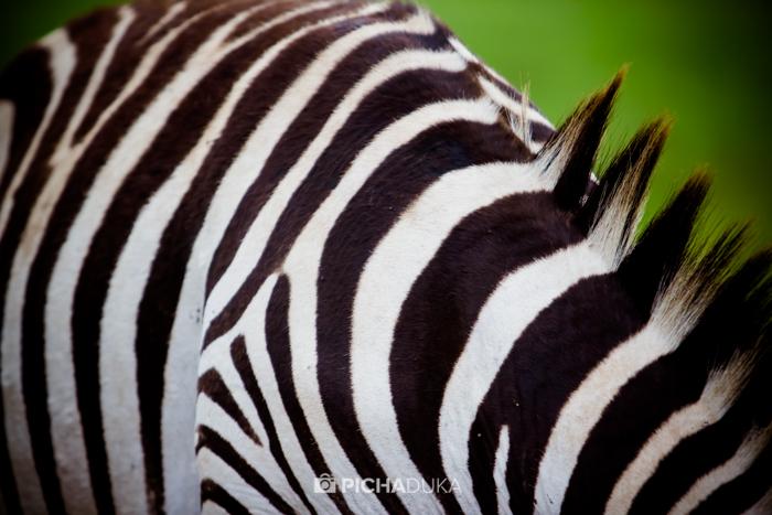 Nairobi_National_Park-17