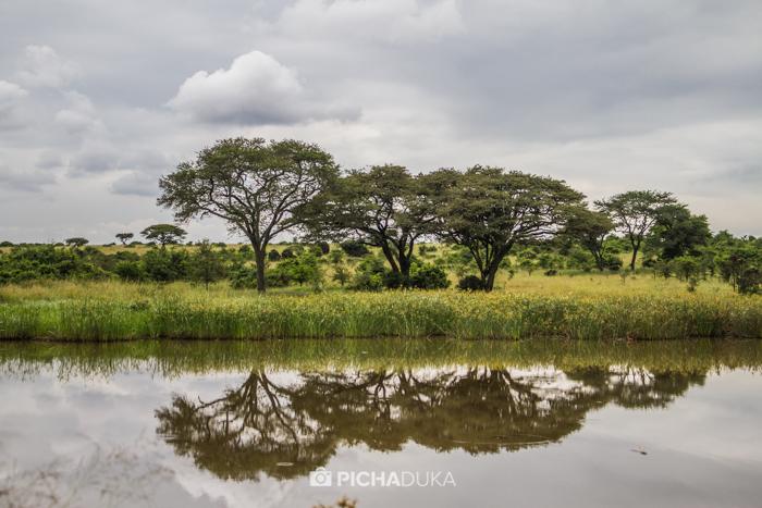 Nairobi_National_Park-4
